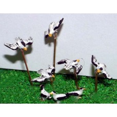 A65p Painted Assorted Seagulls x 8 N Scale 1:148