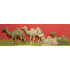 ZO4p Painted Assorted Camels OO scale 1/76th