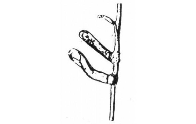 XA11 Band arms Bassoon(54mm Scale)